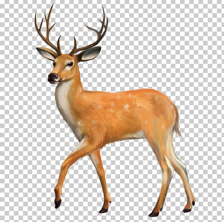 White-tailed Deer Red Deer PNG, Clipart, Animal, Animals