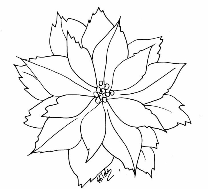 Poinsettia Coloring Book Flower Christmas Png Clipart Adult Angle Area Artwork Black And White Free Png