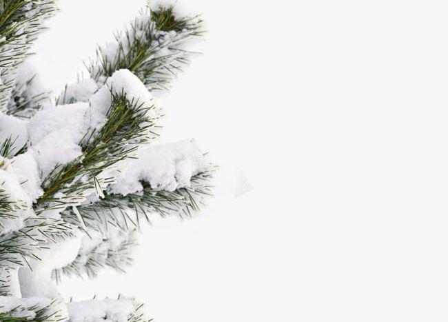 Winter Snow Trees Night Scene 2 Stock Illustration - Illustration of noel,  decorative: 3655868