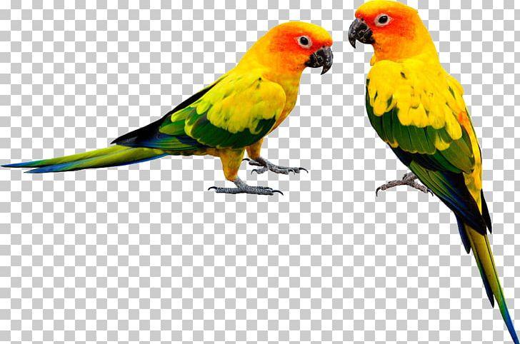 Parrot PNG, Clipart, Animal, Bathroom, Beak, Bird, Bird Baths Free PNG Download