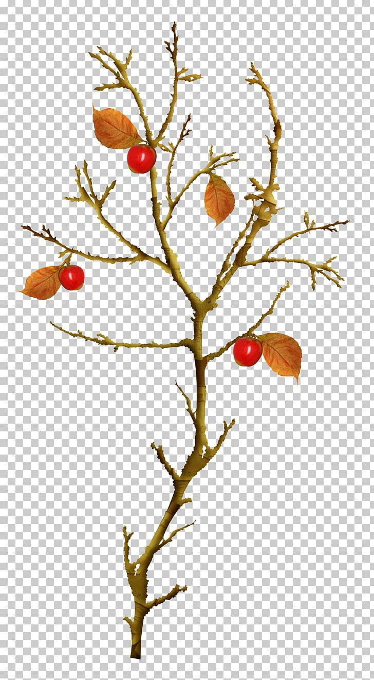 Autumn Leaves Twig Tree PNG, Clipart, Albom, Apple, Apple Tree, Autumn, Autumn Leaves Free PNG Download