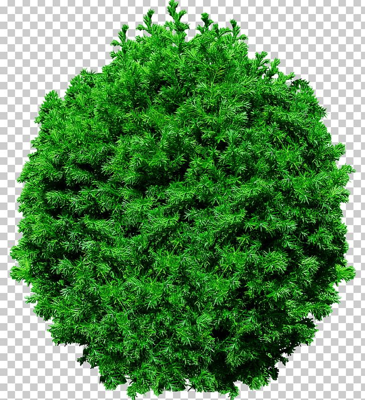 Tree PNG, Clipart, Biome, Computer Icons, Conifer, Download, Encapsulated Postscript Free PNG Download