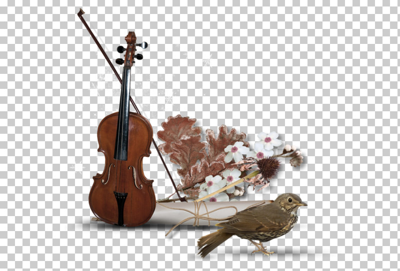 String Instrument String Instrument Musical Instrument Violin Family Cello PNG, Clipart, Cello, Double Bass, Fiddle, Music, Musical Instrument Free PNG Download
