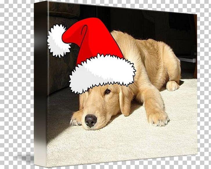Golden Retriever Labrador Retriever Puppy Dog Breed Companion Dog PNG, Clipart,  Free PNG Download