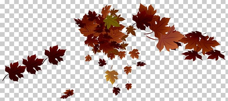 Maple Leaf Autumn Leaf Color PNG, Clipart, Autumn, Autumn Leaf Color, Autumn Leaves, Branch, Flowering Plant Free PNG Download