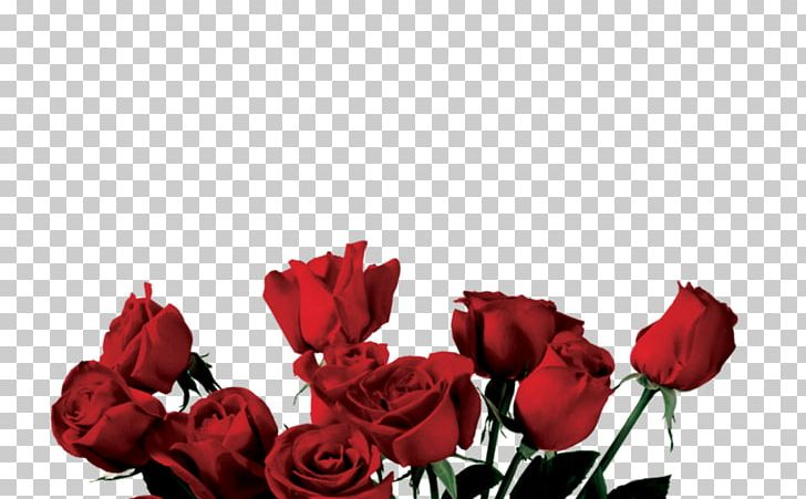 Rose Portable Network Graphics Flower PNG, Clipart, Cut