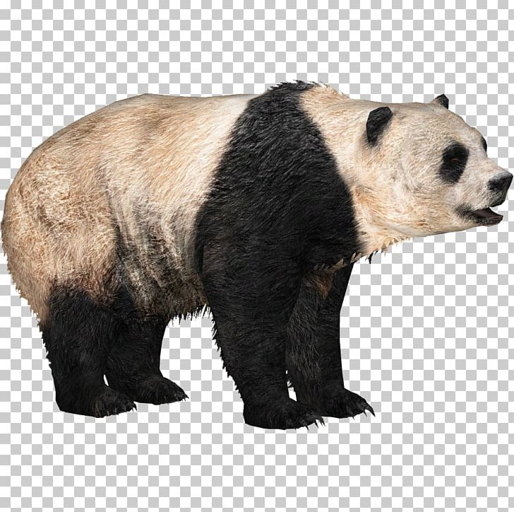 Zoo Tycoon 2 Giant Panda Brown Bear PNG, Clipart, Animal