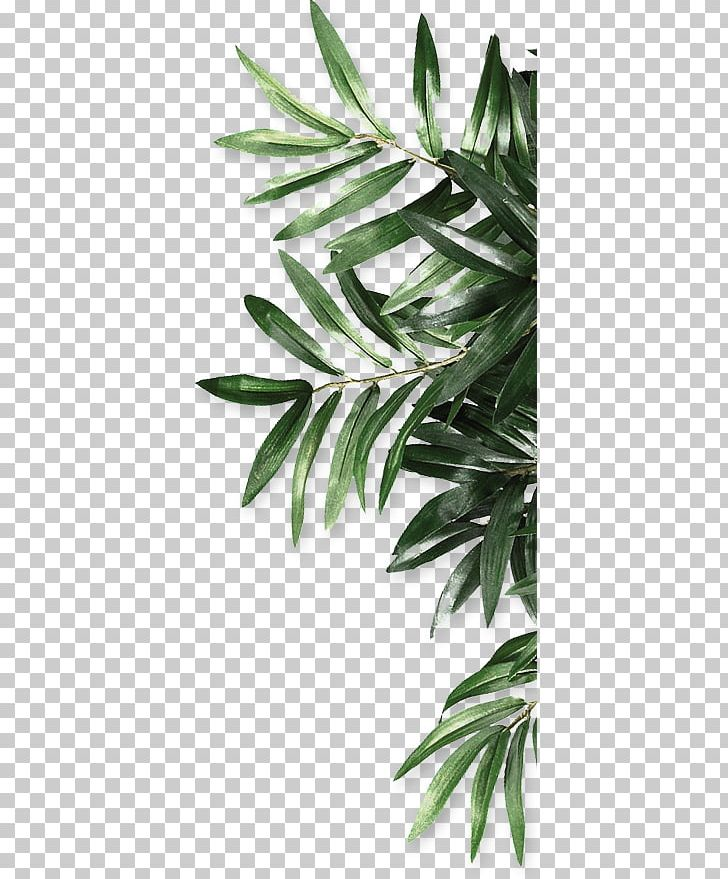 Leaf Be Natural Organics Android PNG, Clipart, Android, Autumn Leaf, Be Natural, Branch, Decoration Free PNG Download