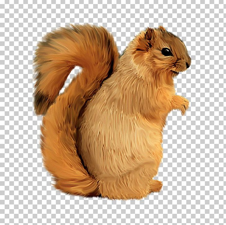 Squirrel PhotoScape Computer Icons PNG, Clipart, Animals, Breeze, Clip Art, Computer Icons, Download Free PNG Download