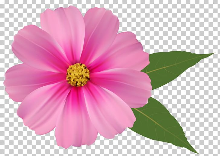 Flowers pink. Png clipart annual plant