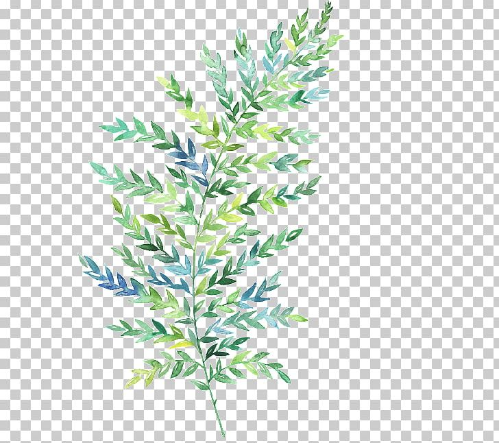 Watercolor Painting Leaf Fern Botanical Illustration PNG, Clipart, Art, Botanical Illustration, Botany, Branch, Evergreen Free PNG Download