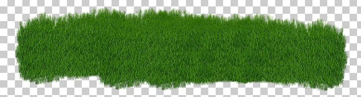 Scutch grass Lawn Seed Dichondra repens Common couch, cesped, angle, grass  png | PNGEgg