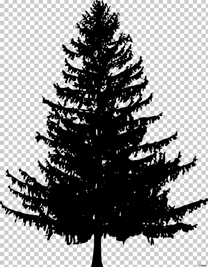 How To Draw Trees Drawing Pine Fir Png Clipart Art Black And