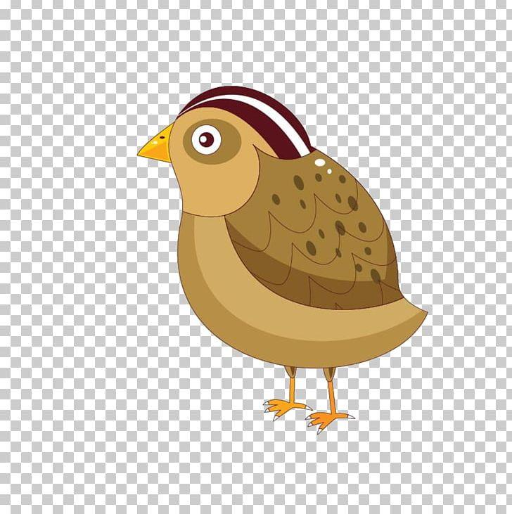 Bird Cartoon Png Clipart Adobe Animate Animals Animation Beak