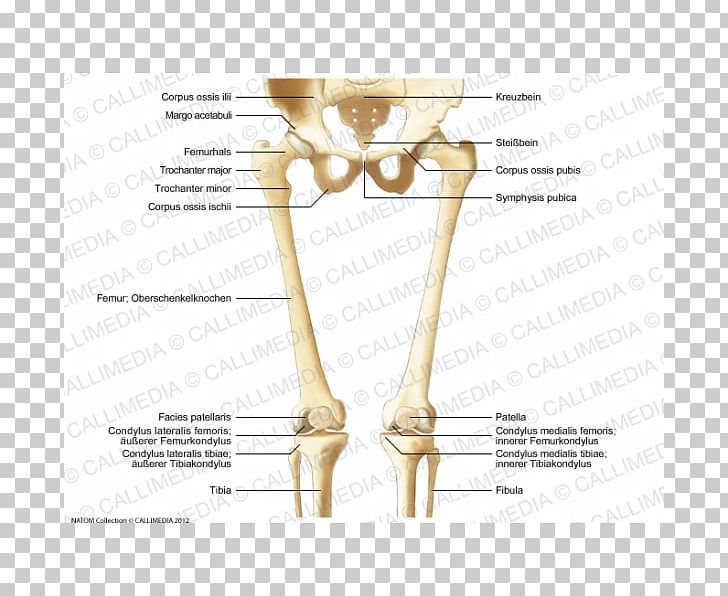finger bone hip knee human leg png, clipart, anatomy, angle, arm, bone,  diagram free png download