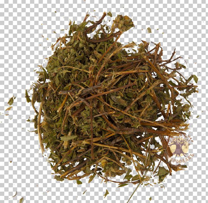 Nilgiri Tea Hōjicha The Incredible Spice Men Green Tea PNG, Clipart, Bai Mudan, Bancha, Biluochun, Chai, Dianhong Free PNG Download