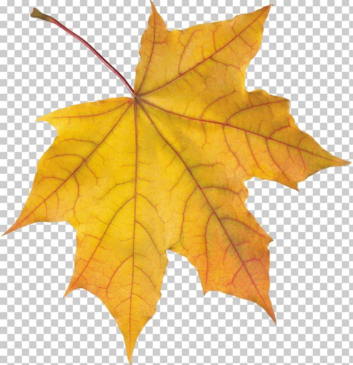 Autumn Leaf Color PNG, Clipart, Appbreeze, Autumn, Autumn Leaf Color, Autumn Leaves, Desktop Wallpaper Free PNG Download