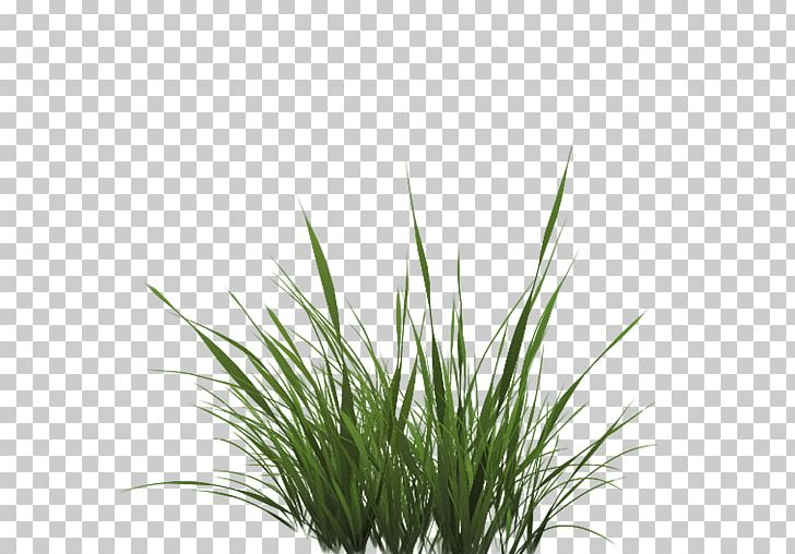 Texture Mapping Drawing Lawn PNG, Clipart, Alpha, Alpha Compositing, Alpha To Coverage, Art, Chrysopogon Zizanioides Free PNG Download
