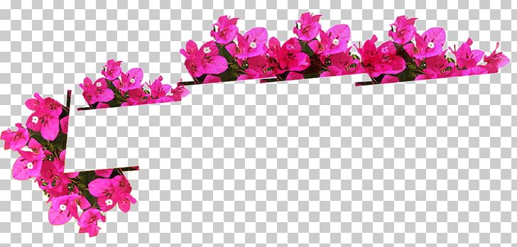 Floral Design Cut Flowers Petal PNG, Clipart, Blossom, Cut Flowers, Floral Design, Floriculture, Flower Free PNG Download