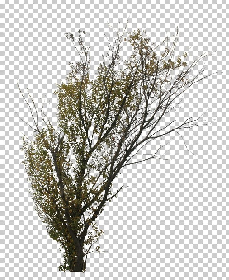 Twig Tree Branch Shrub Deciduous PNG, Clipart, Autumn, Birch, Branch, Deciduous, Deciduous Tree Free PNG Download