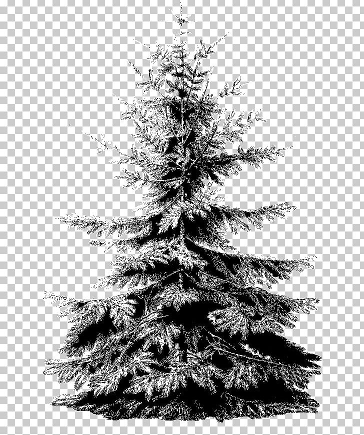 White Christmas Tree Png.Spruce Christmas Ornament Christmas Tree Png Clipart Black