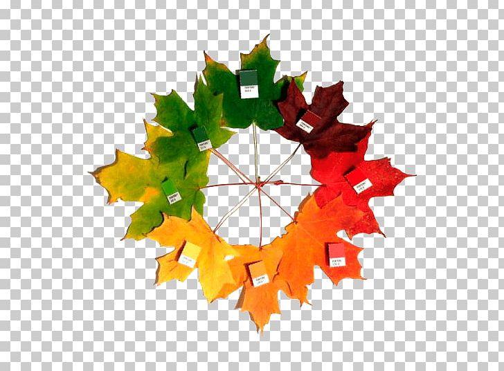 Sugar Maple Autumn Leaf Color Maple Leaf PNG, Clipart, Autumn, Autumn Leaf Color, Christmas Ornament, Color, Coloring Book Free PNG Download