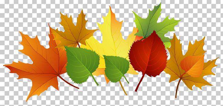 Autumn Leaf Color PNG, Clipart, Autumn, Autumn Leaf Color, Clip Art, Clipart, Color Free PNG Download