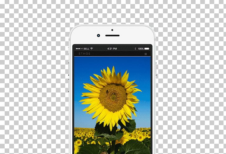 Smartphone Bee Mobile Phone Accessories Sunflower M Text Messaging PNG, Clipart, Bee, Daisy Family, Electronics, Flower, Flowering Plant Free PNG Download