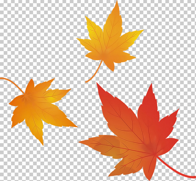 Maple Leaves Autumn Leaves Fall Leaves PNG, Clipart, Autumn, Autumn Leaves, Black Maple, Deciduous, Fall Leaves Free PNG Download