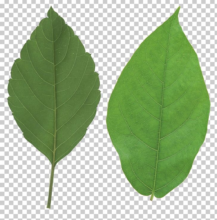 Autumn Leaf Color Look At Leaves PNG, Clipart, Autumn Leaf Color, Color, Computer Icons, Free, Green Free PNG Download
