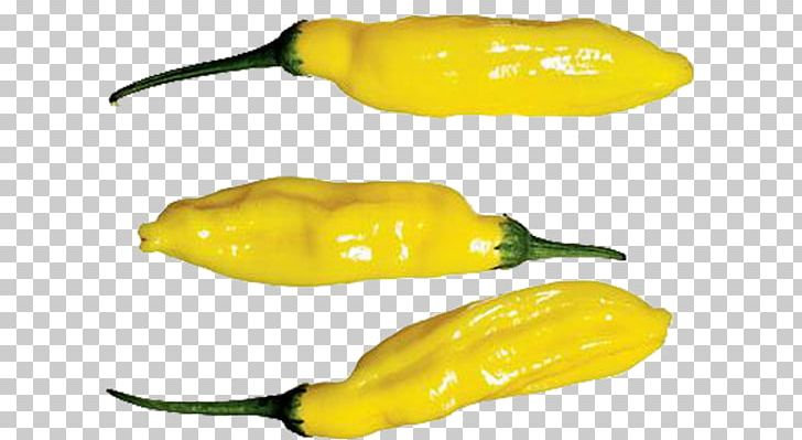 Habanero Serrano Pepper Jalapeño Pasilla Yellow Pepper PNG, Clipart, Bell Peppers And Chili Peppers, Biber, Capsicum, Capsicum Annuum, Chili Pepper Free PNG Download