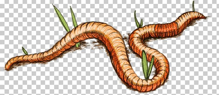 Worm Eisenia Fetida Vermicompost Parasitism PNG, Clipart, Animal, Compost, Earthworm, Eisenia Fetida, Fact Free PNG Download