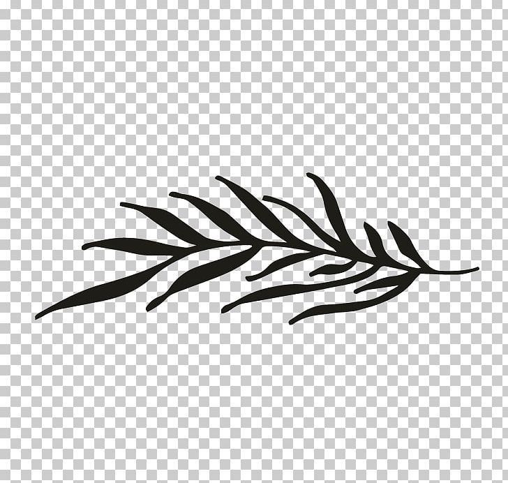 Line White Feather Invertebrate PNG, Clipart, Bird, Black And White, Branch, Clip Art, Feather Free PNG Download
