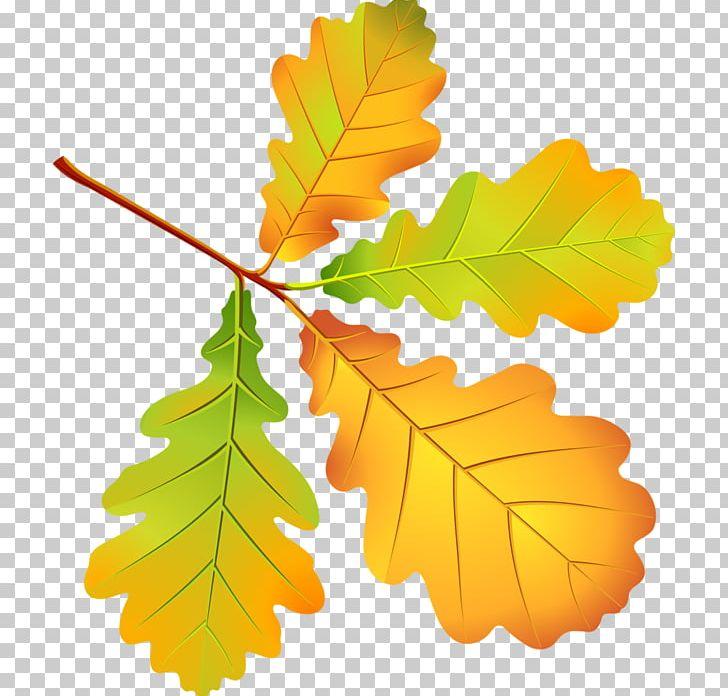 Leaf Autumn Leaves Oak PNG, Clipart, Autumn, Autumn Leaves, Branch, Cdr, Clip Art Free PNG Download