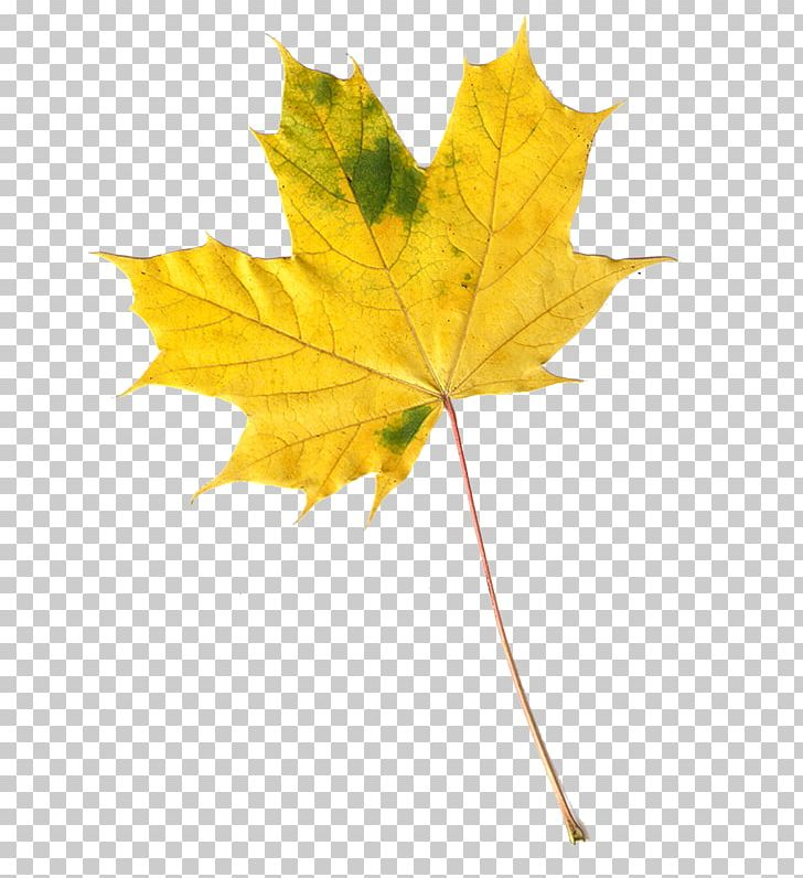 Maple Leaf Autumn Leaves PNG, Clipart, Autumn, Autumn Leaves, Blog, Depositphotos, Fall Leaves Free PNG Download