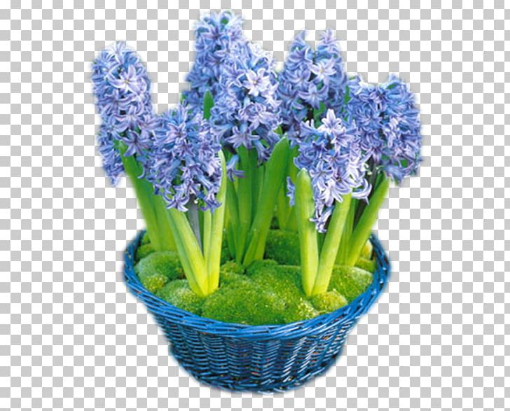 Cut Flowers Internet English Lavender PNG, Clipart, Autumn, Blog, Com, Common Sunflower, Cut Flowers Free PNG Download
