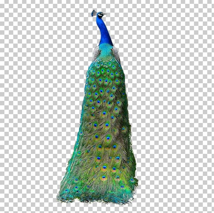 Asiatic Peafowl Feather PNG, Clipart, Animals, Asiatic, Asiatic Peafowl, Day Dress, Dress Free PNG Download