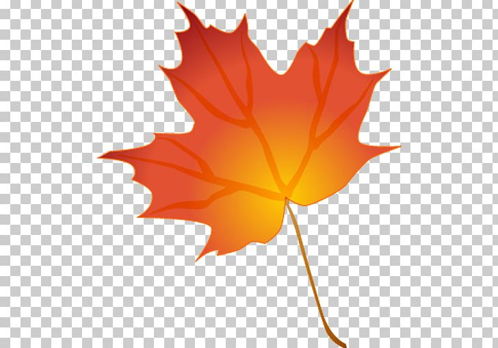 Autumn Leaf Color Drawing PNG, Clipart, Autumn, Autumn Leaf Color, Autumn Leaves, Cartoon, Clip Art Free PNG Download