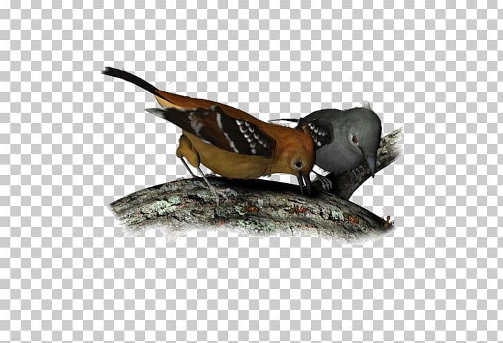 Bird Beak Atlantic Canary Feather PNG, Clipart, Animals, Atlantic Canary, Beak, Bird, Color Free PNG Download