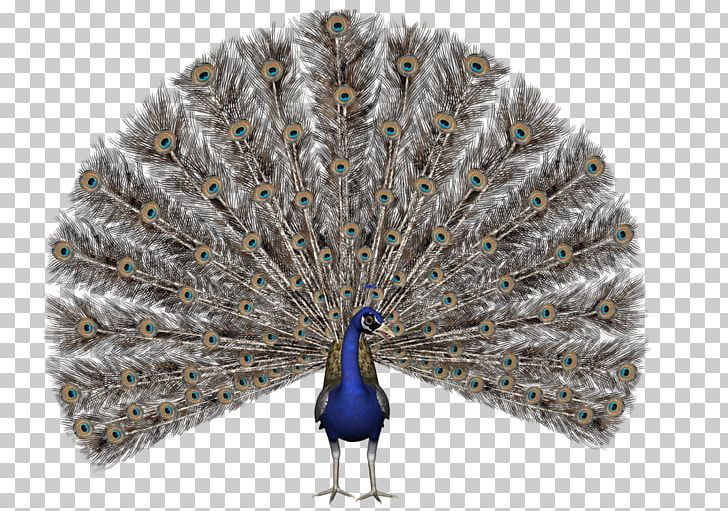 Bird Asiatic Peafowl Stock Photography PNG, Clipart, Animals, Asiatic Peafowl, Beak, Bird, Can Stock Photo Free PNG Download