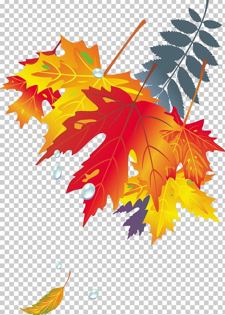 Maple Leaf Autumn Leaf Color Japanese Maple PNG, Clipart, Autumn Leaf Color, Autumn Leaves, Color, Fall Leaves, Golden Frame Free PNG Download