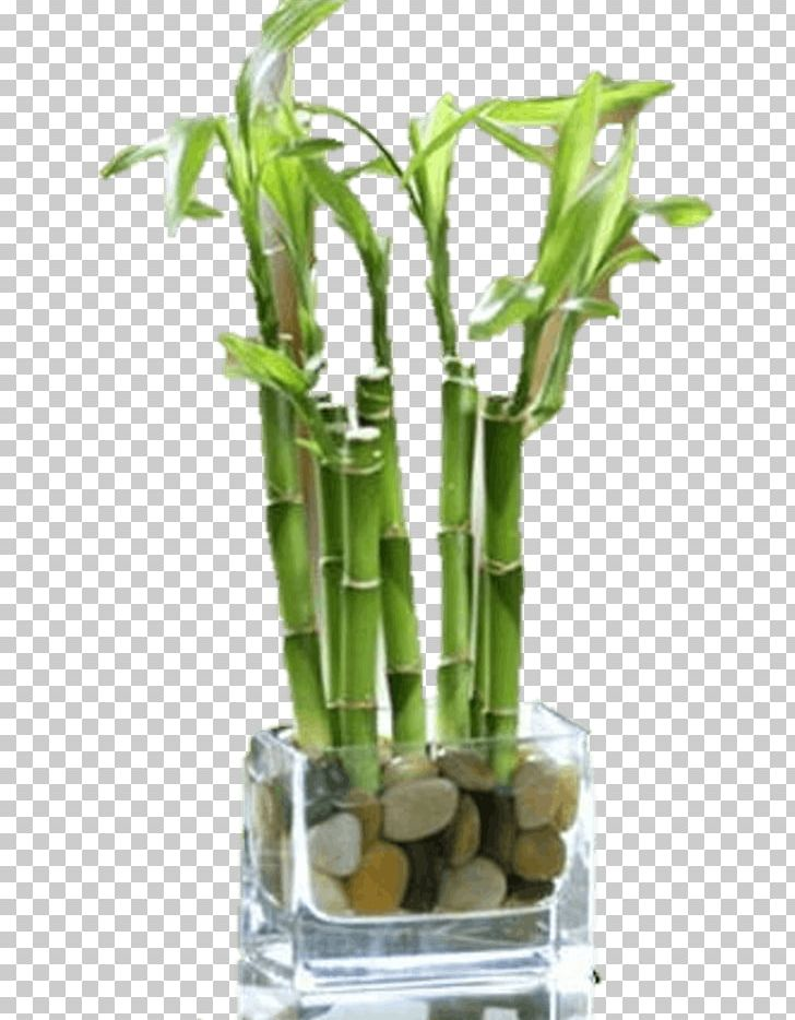 Wheaton Glen Ellyn Carol Stream West Chicago Floral Design PNG, Clipart, Administrative Professionals Day, Bamboo, Carol Stream, Cut Flowers, Floral Design Free PNG Download