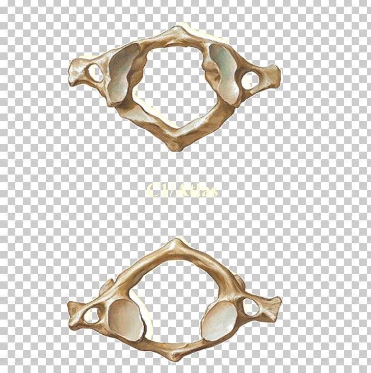 Atlas Axis Vertebral Column Cervical Vertebrae PNG, Clipart