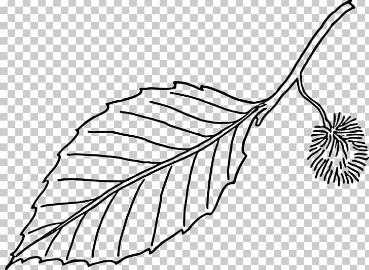 European Beech Autumn Leaf Color Tree PNG, Clipart, Autumn Leaf Color, Beech, Black And White, Branch, Drawing Free PNG Download
