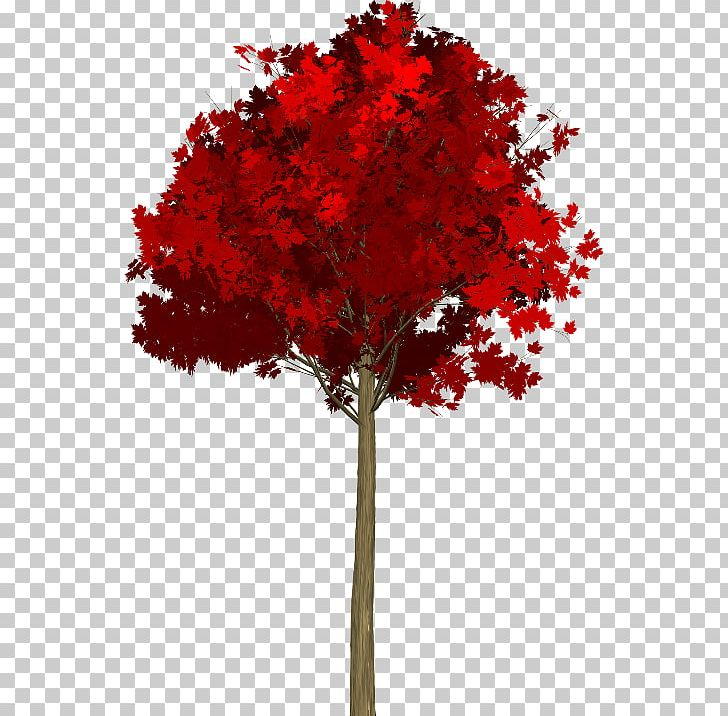 Maple Leaf Red Maple Acer Japonicum Tree PNG, Clipart, Acer Japonicum, Agac, Autumn Leaf Color, Bonsai, Branch Free PNG Download