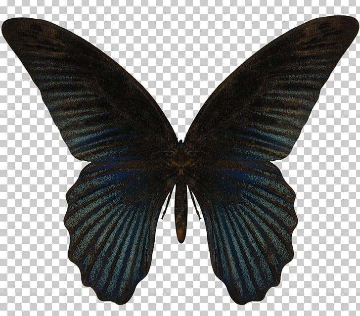 Butterfly Insect Stock Photography PNG, Clipart, Arthropod, Brush Footed Butterfly, Dragonflies, Drawing, Fotosearch Free PNG Download