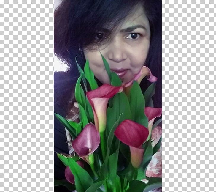 Tulip Floral Design Rose Family Petal PNG, Clipart, Black Hair, Closeup, Family, Flora, Floral Design Free PNG Download