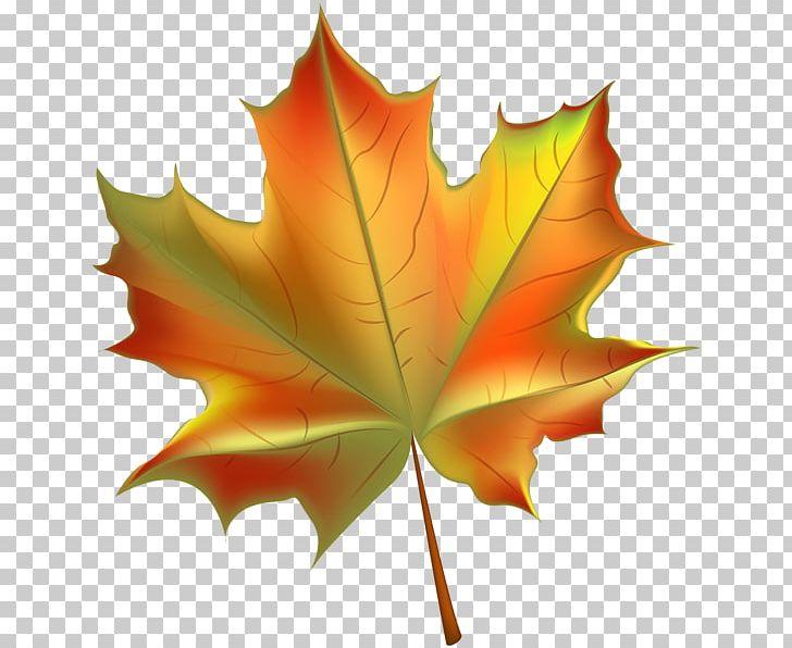 Autumn Leaf Color PNG, Clipart, Autumn, Autumn Leaf Color, Beautiful Autumn Cliparts, Color, Deciduous Free PNG Download