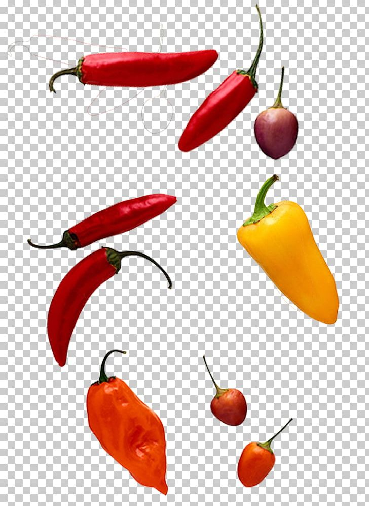 Chili Pepper Computer File PNG, Clipart, All Kinds, Bell Peppers And Chili Peppers, Black Pepper, Cartoon Chili, Chili Free PNG Download