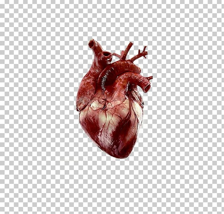 Heart Anatomy Human Body Giphy PNG, Clipart, Anatomy